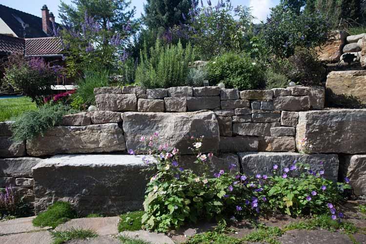 Garten mit Pflanzen