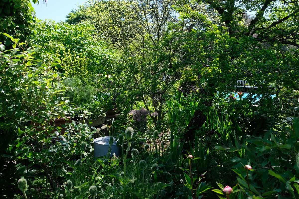 pflanzen-beet-garten